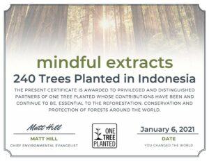 Tree Planting Indonesia